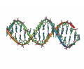 DNA_double_helix_horizontal.png